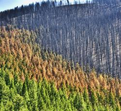 The immediate result of a recent forest fire near Sun Valley, Idaho USA